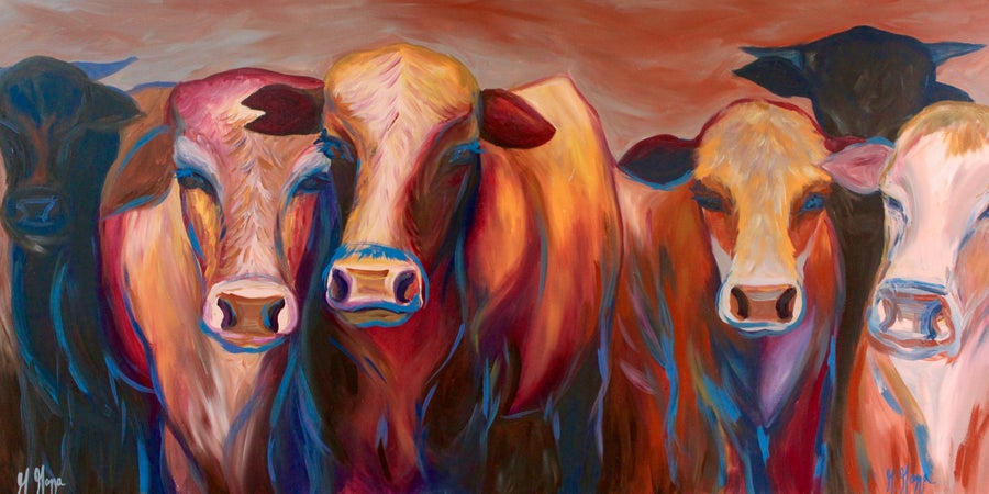 Image of Curious Cows