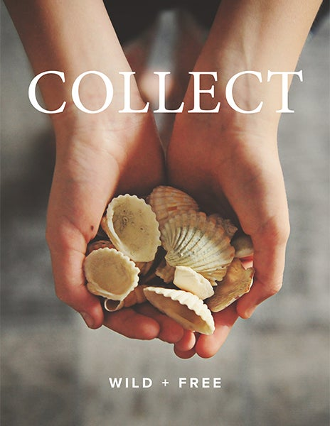 Image of COLLECT Content Bundle