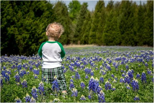Image of BLUEBONNET MINI SESSIONS - $112.50 DEPOSIT