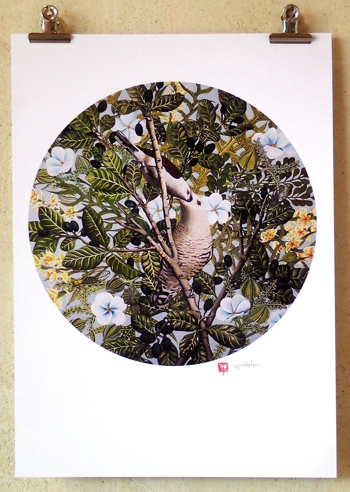 'Shining Cuckoo' A3 Print
