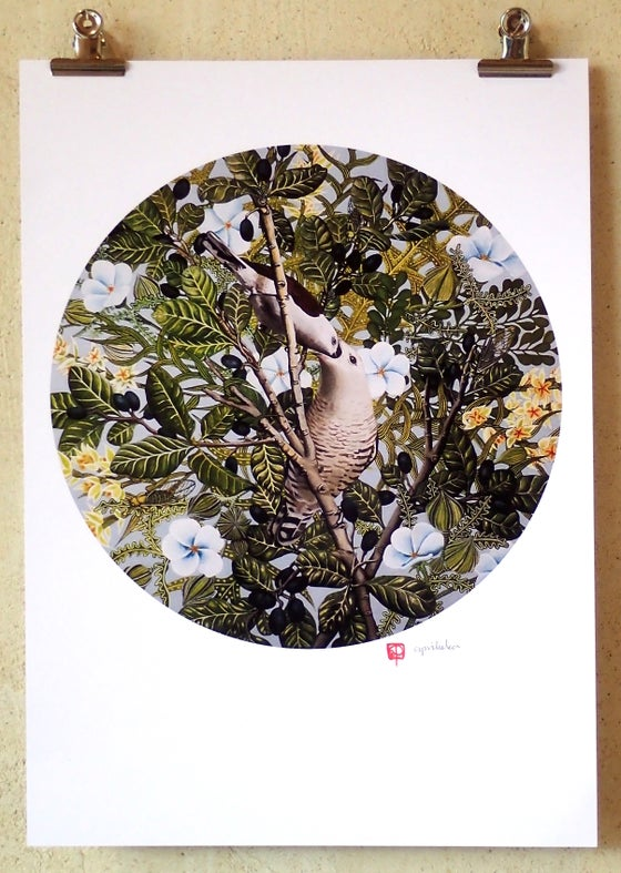 Image of 'Shining Cuckoo' A3 Print