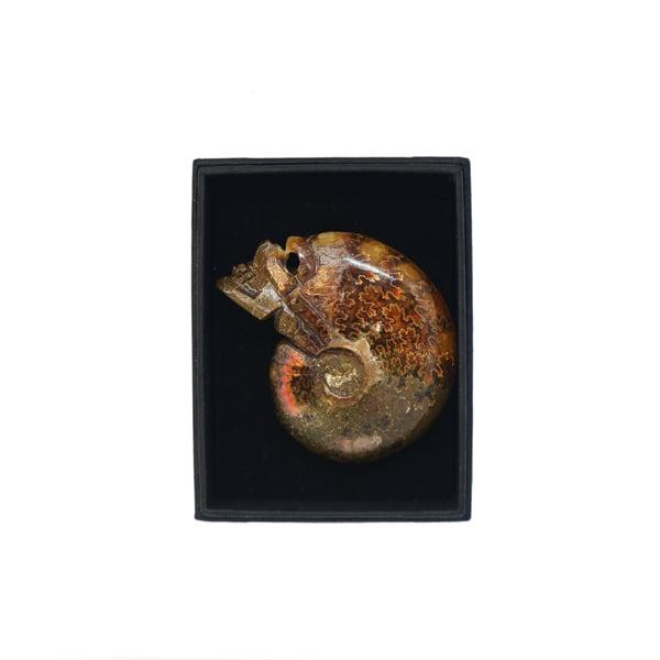 Image of Ammonite skull carving box