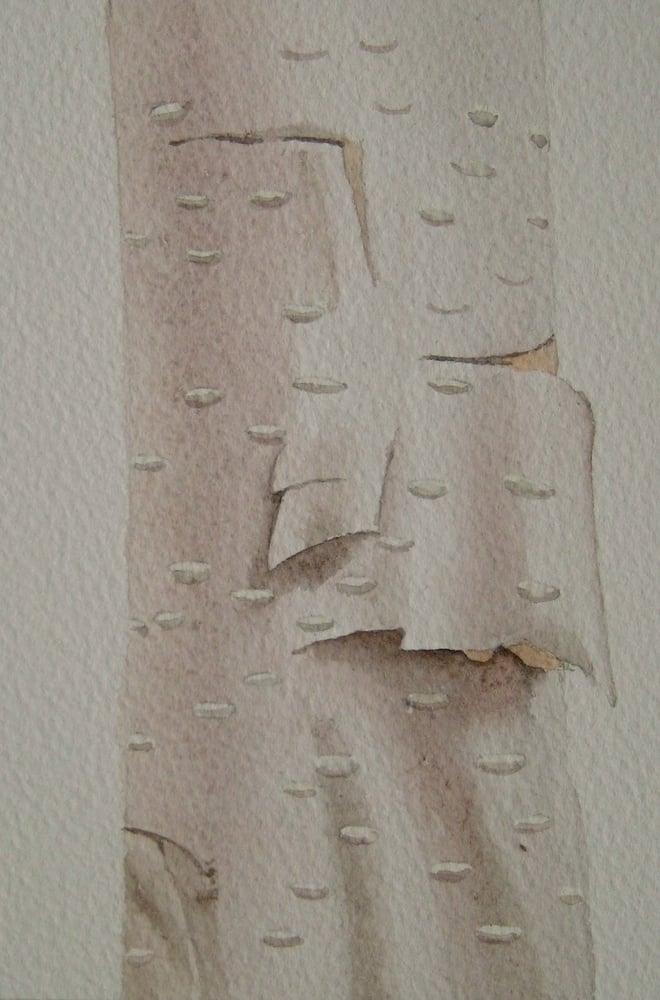 Image of Silver Birch