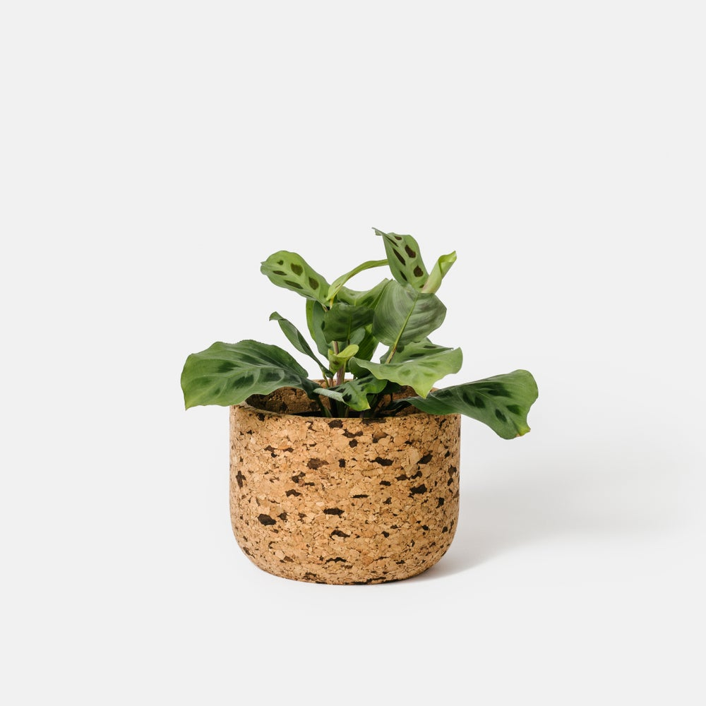 Image of Tall Speckle Cork Bowl