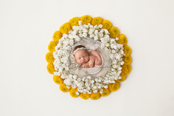 Image of Baby Breath Newborn Digital Backdrop