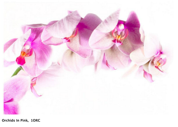Image of Orchids In Pink