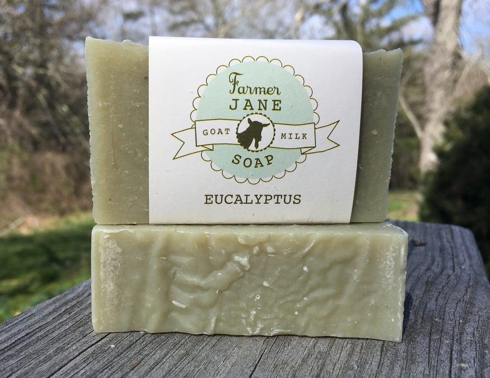 Image of Eucalyptus