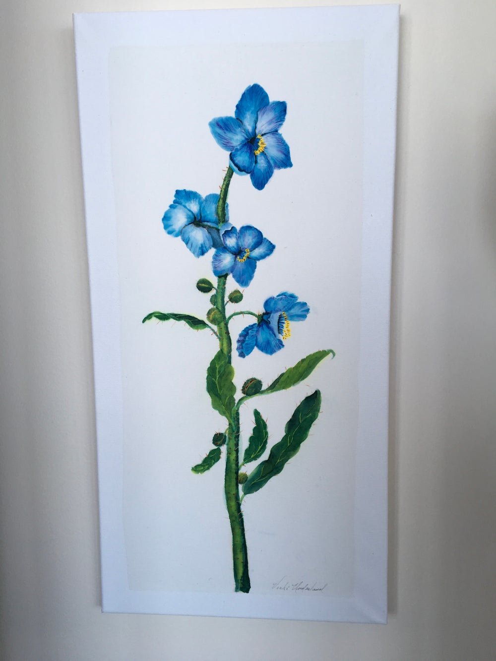 Image of Blue Poppy of Tibet