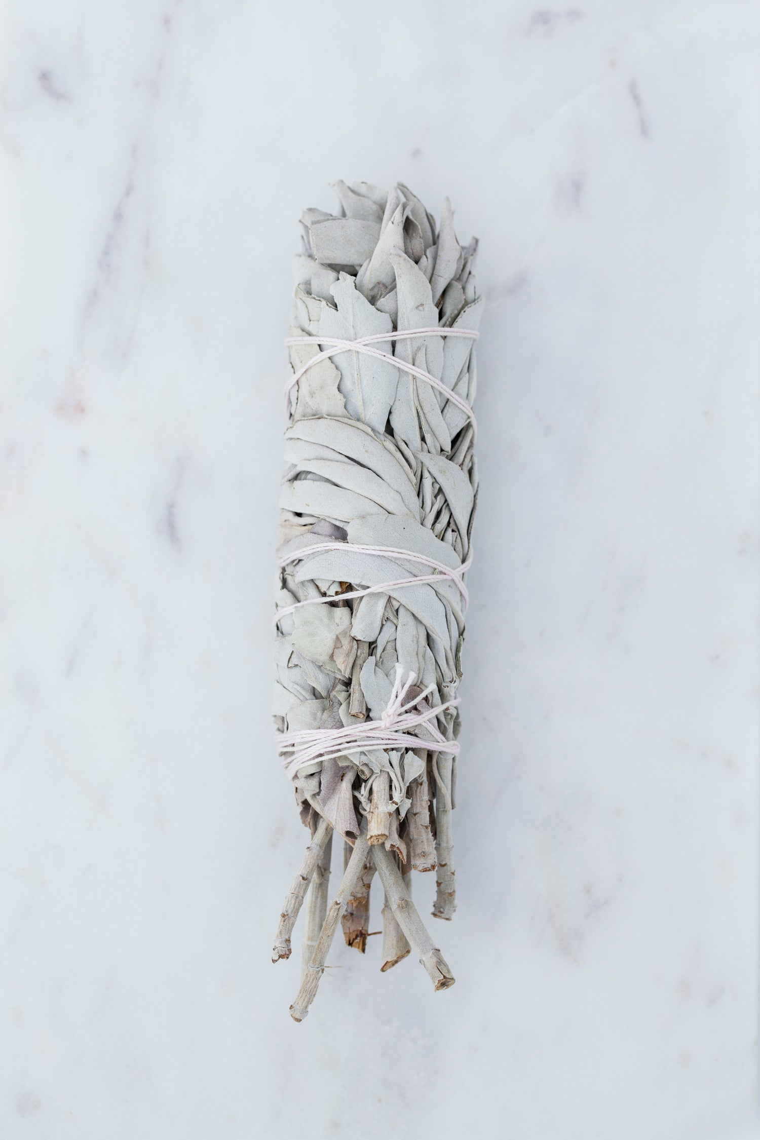 Image of Medium White Sage