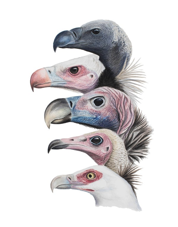 "Image of 11x14"" Limited Giclee Print: Vultures of Gorongosa National Park, Mozambique"