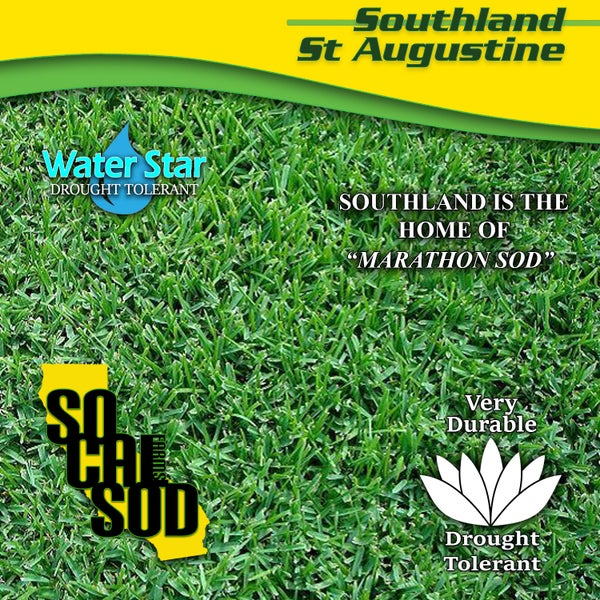 Image of SOUTHLAND ST. AUGUSTINE - Durable, Drought Tolerant