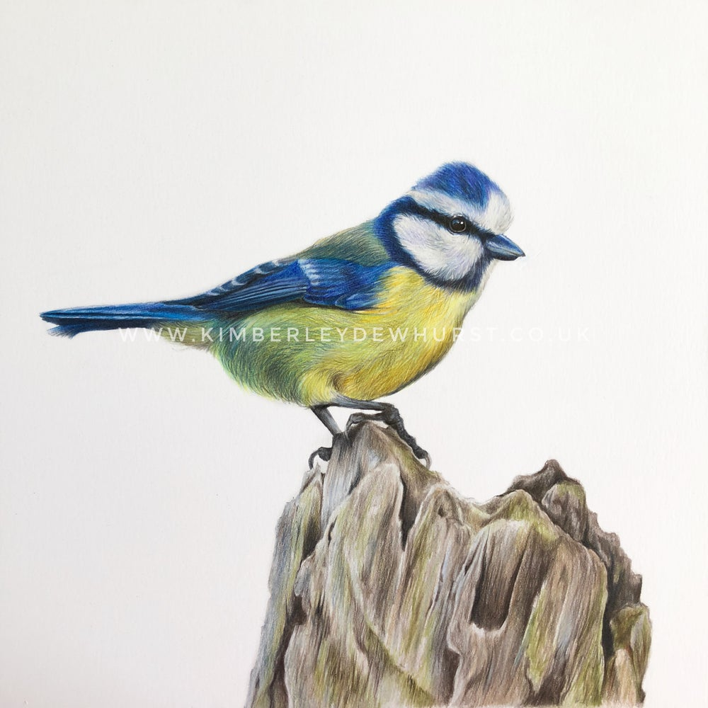 Image of 'Blue Tit' Limited Edition Print