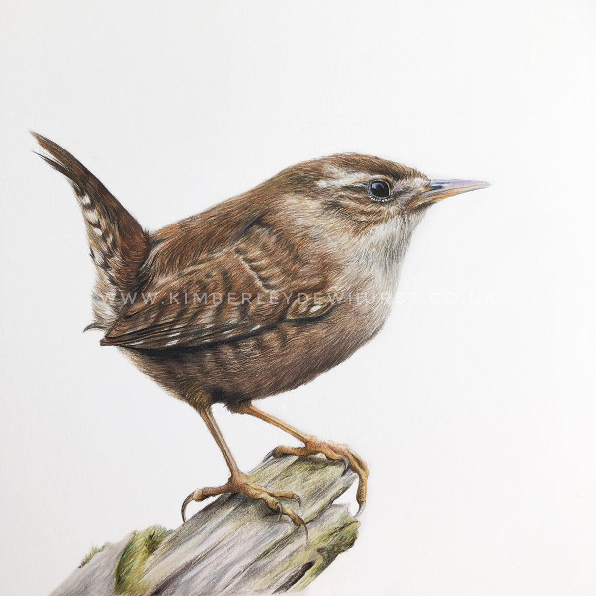 Image of 'Wren' Limited Edition Print