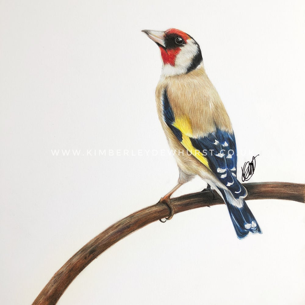 Image of 'Goldfinch' Limited Edition Print