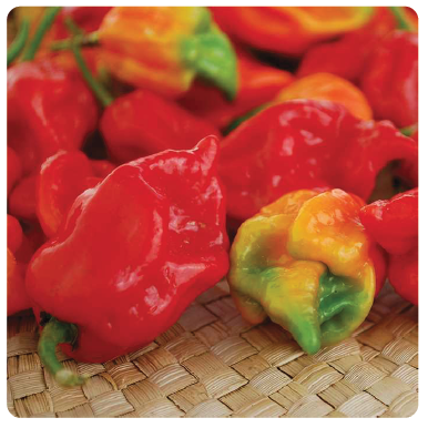 Image of Trinidad Scorpion (Moruga)