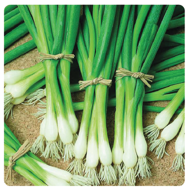 Image of Warrior Bunching Onion
