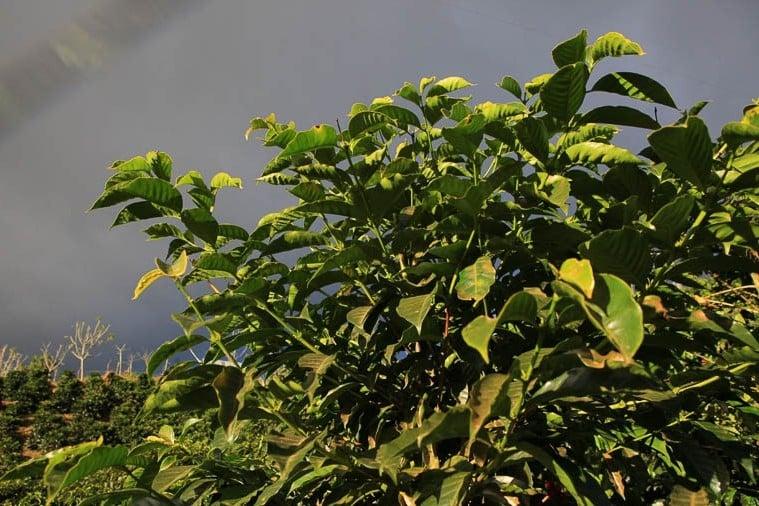 Image of Costa Rica: Helsar de Zarcero