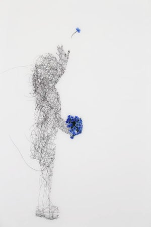 Image of Forget me not (Chatham Island Forget me not)