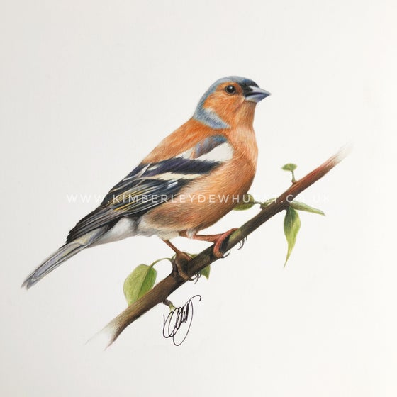 Image of 'Chaffinch' Limited Edition Print