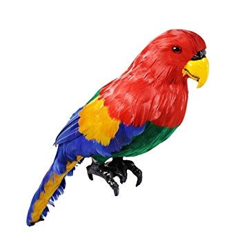 Image of PARROT 3