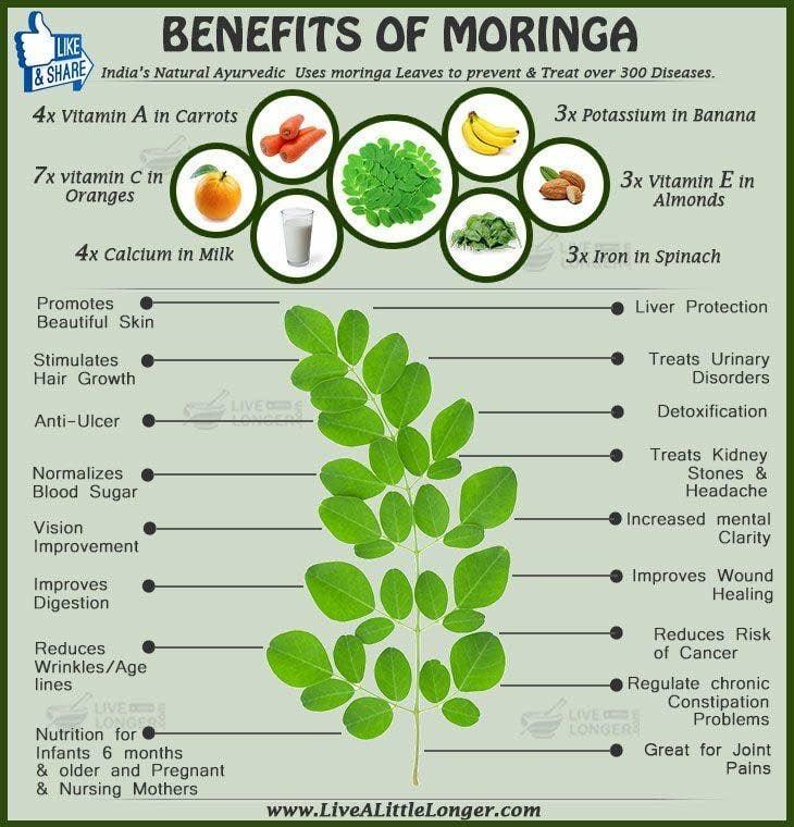 Image of Moringa Powder
