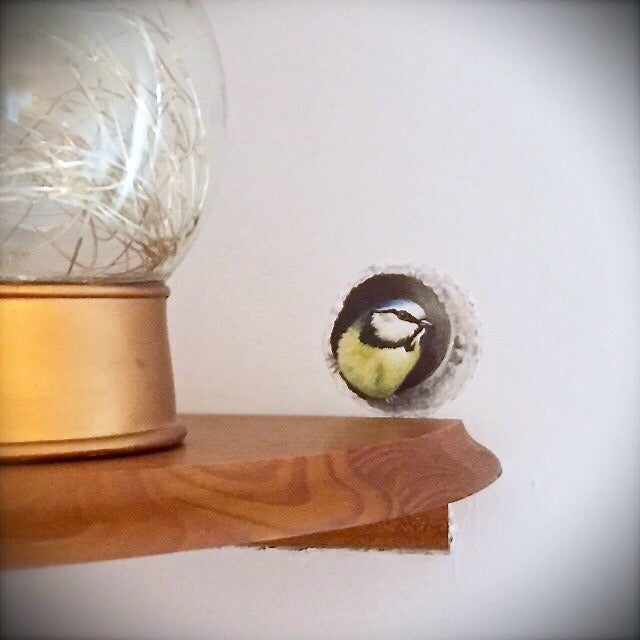 Image of Bessie Blue tit in wall ~ Wall decal