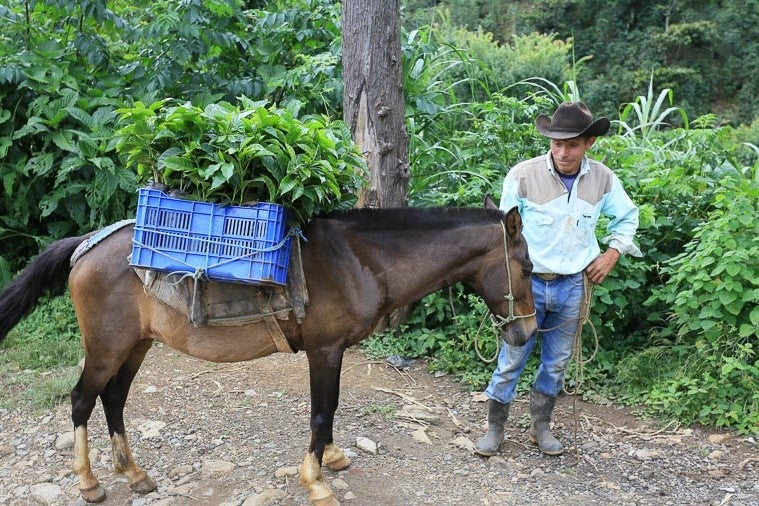 Image of Guatemala: Huehuetenango