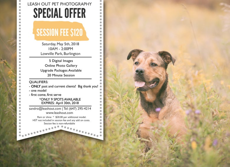 Image of Special Offer, Spring Mini Sessions!