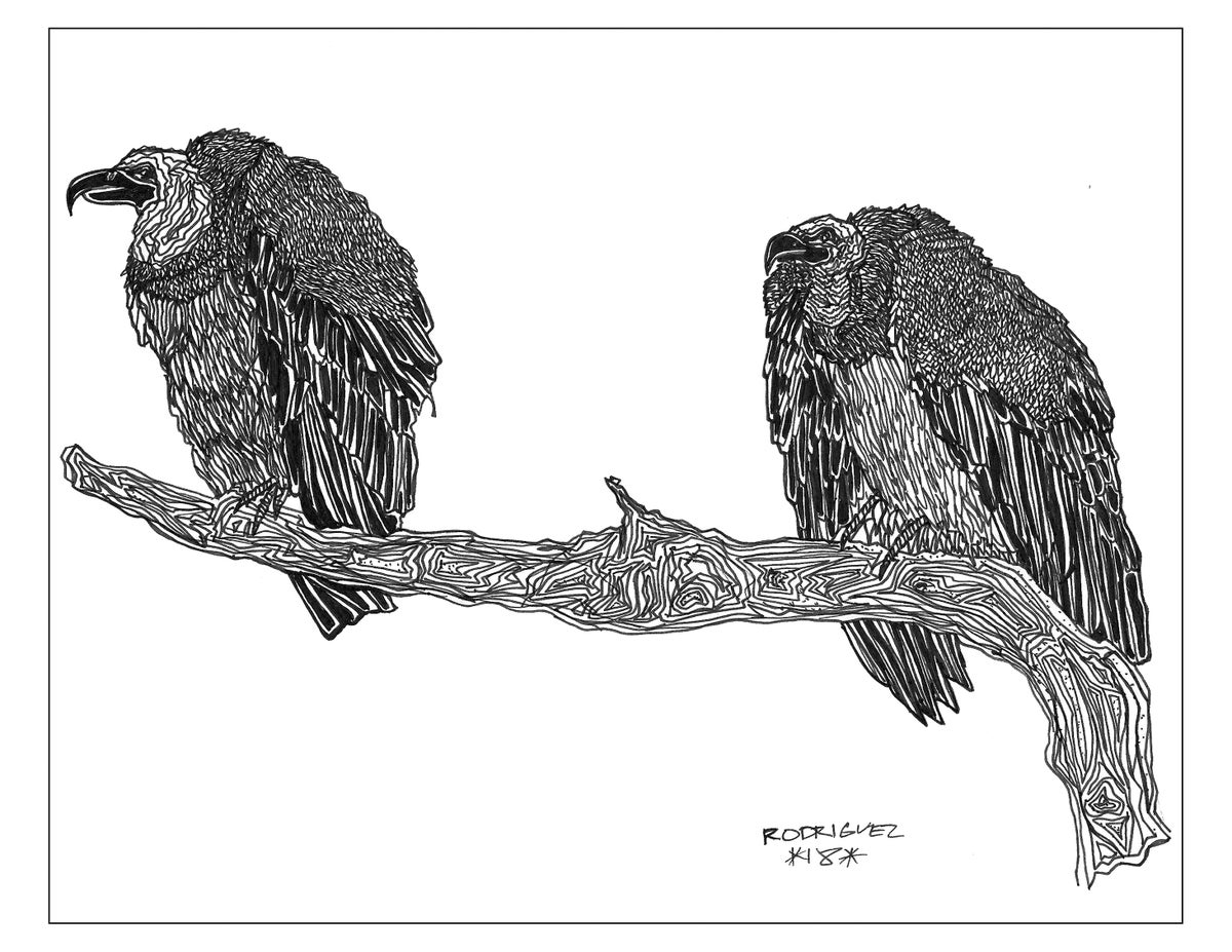 Image of VULTURES 8.5X11 PRINT