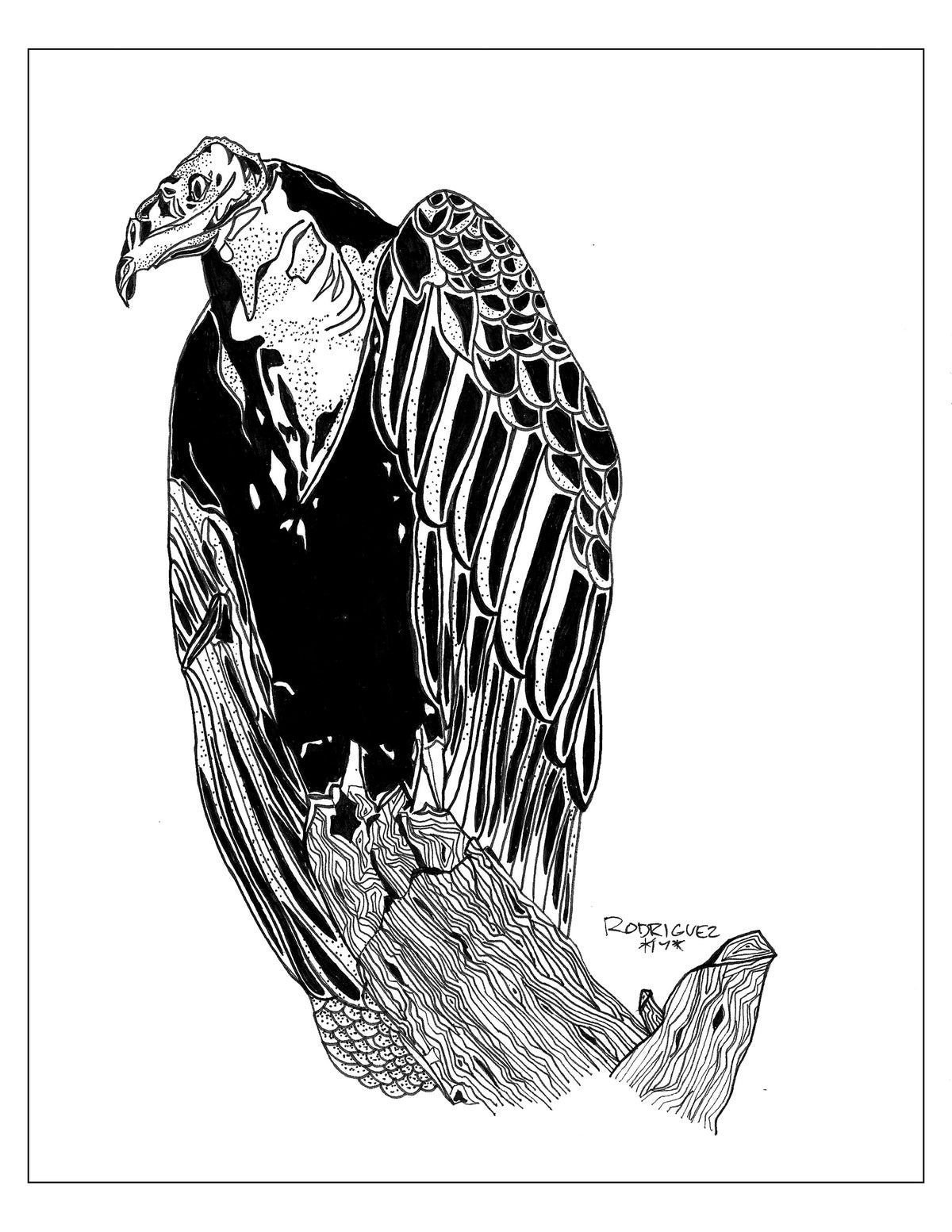 Image of VULTURE 8.5X11 PRINT
