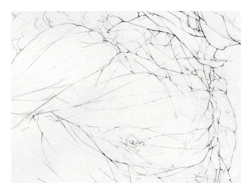 Image of Schmetterling Linear I