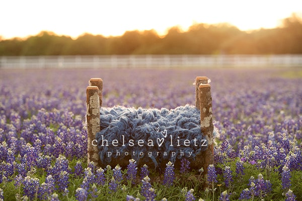 Image of Bluebonnet Digital Backdrop Bundle