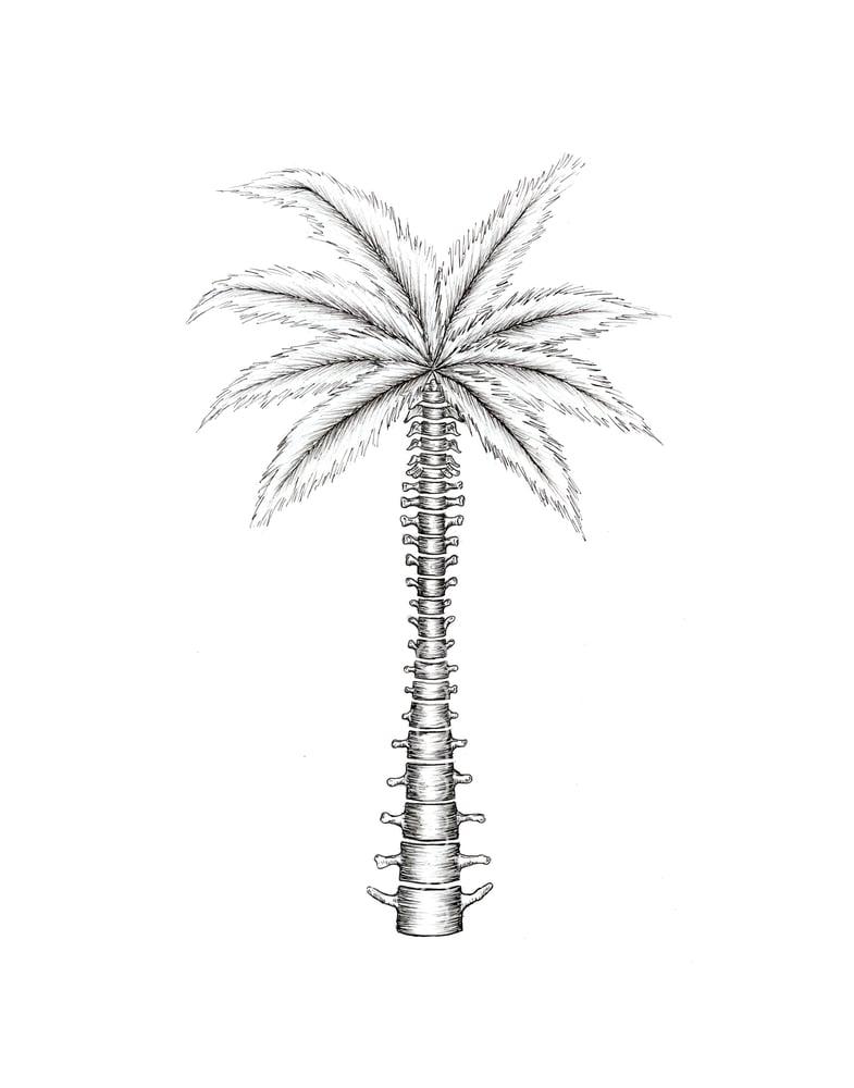 Image of Island Spine