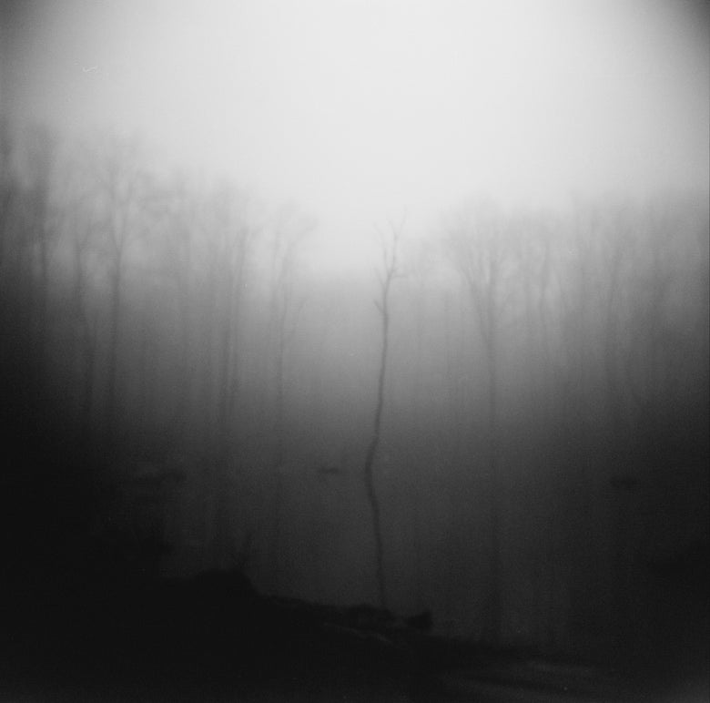 Image of Trees in the Mist