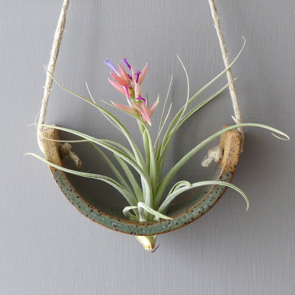 Image of Small Hanging Air Plant Cradle - Gunmetal Green Planter Vase