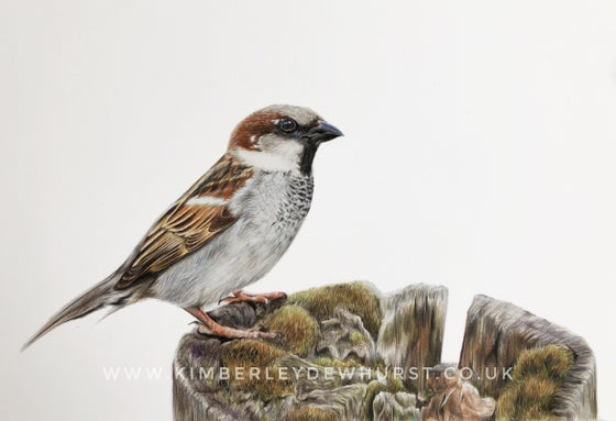 Image of 'House Sparrow' Limited Edition Print