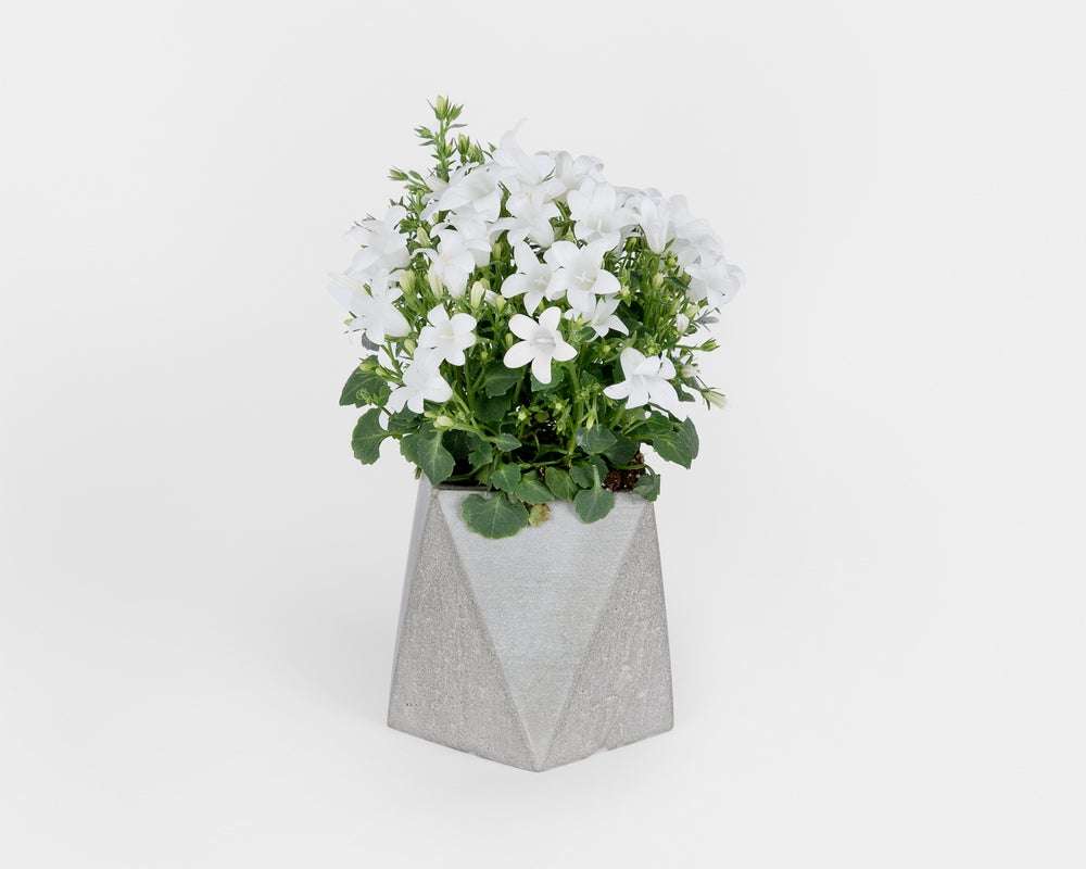 Image of Pot - Planteur M2