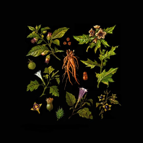 Image of Folklore of Plants Vol.II - The Venefic Garden