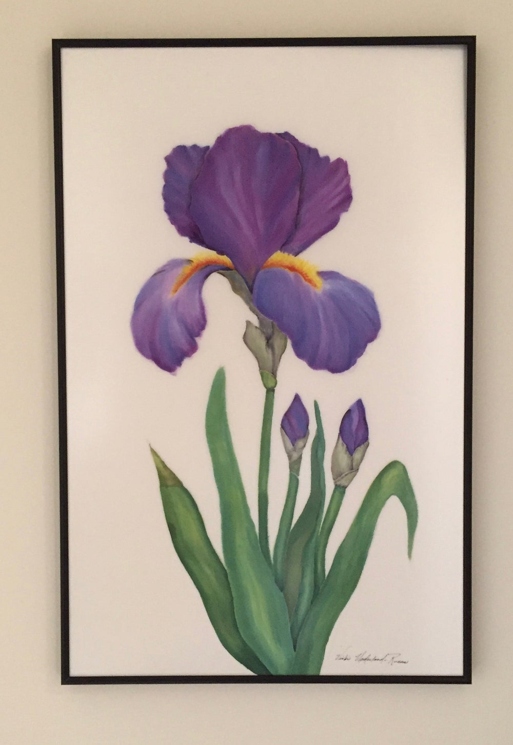 Image of Purple Iris