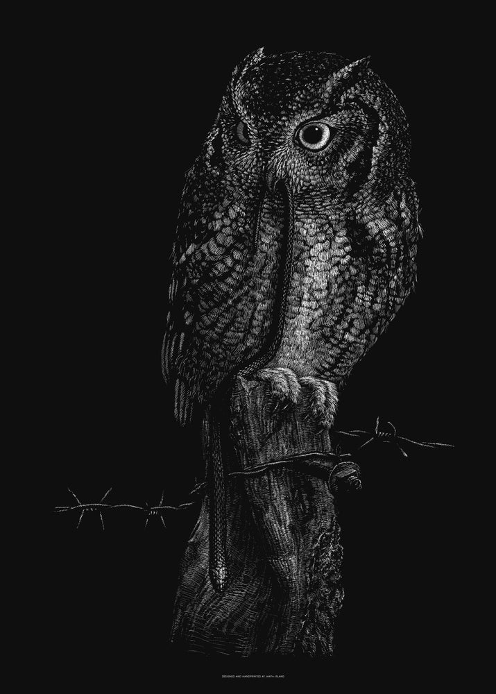 Image of »Little Owl« Artprint