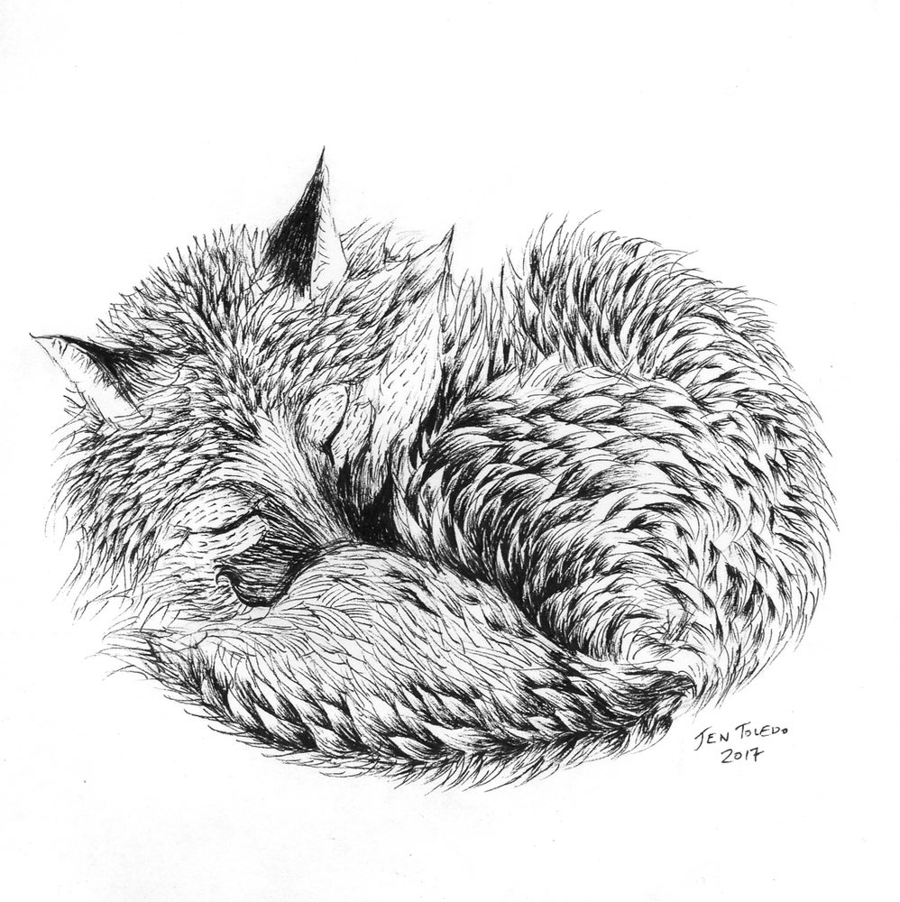 Image of Curled Red Fox (Print)