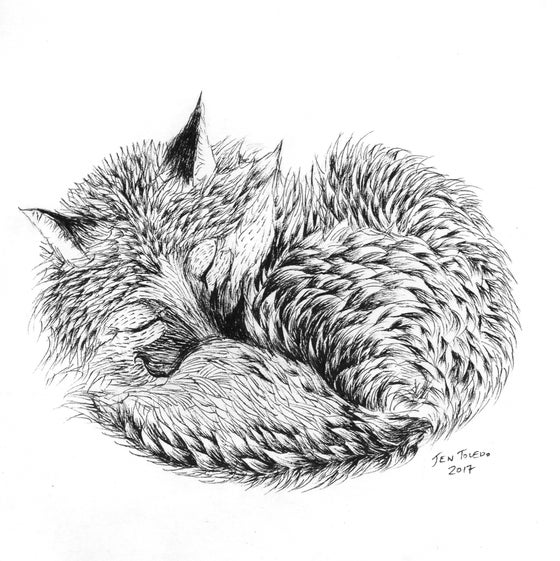 Image of Curled Red Fox