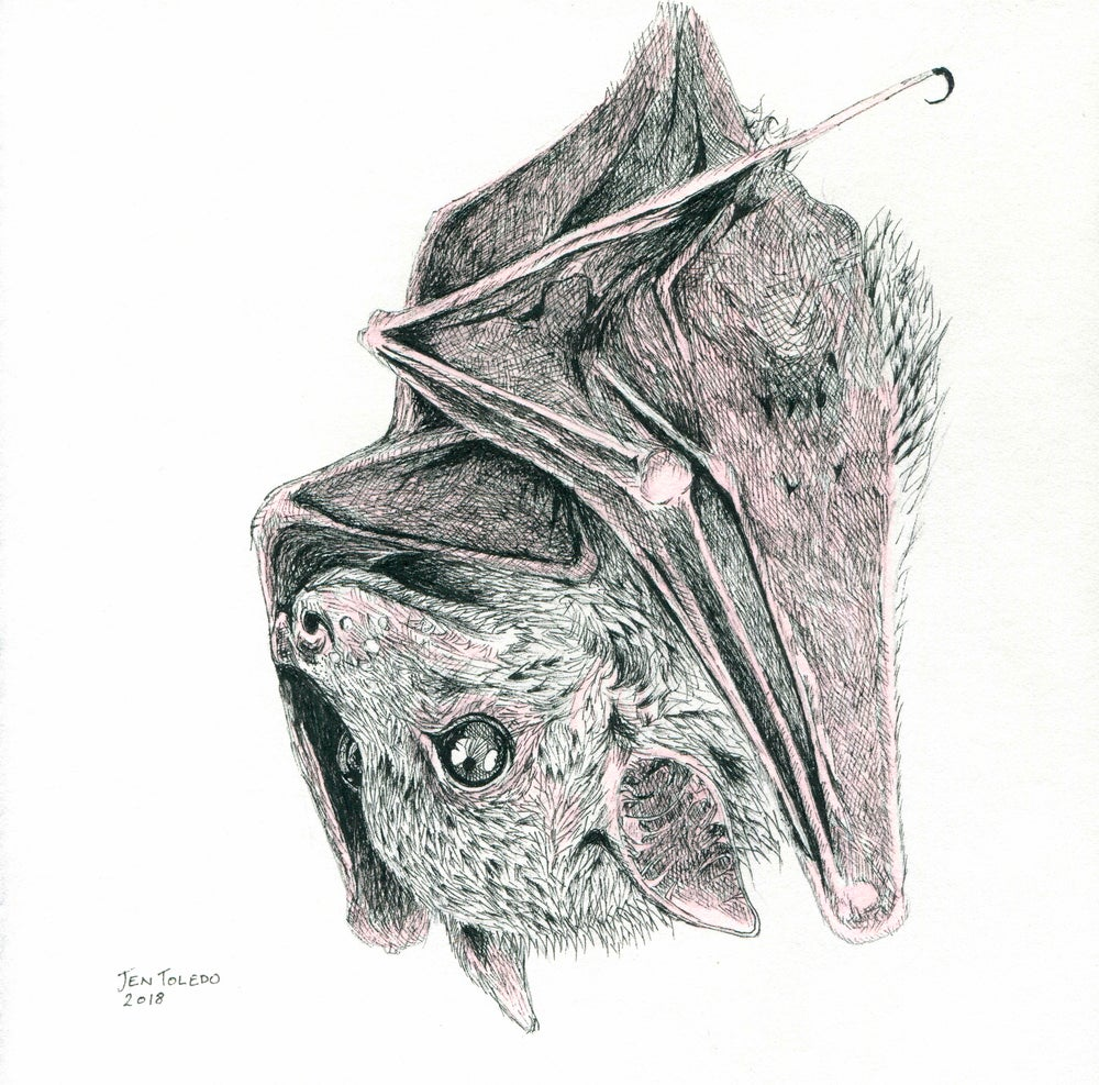 Image of Brown Bat