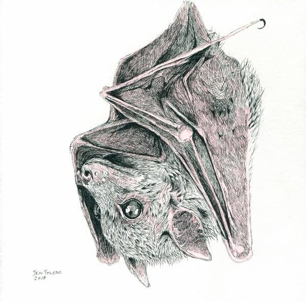 Image of Brown Bat