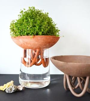 Image of RHIZO - vase