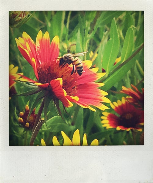 Image of save the bees