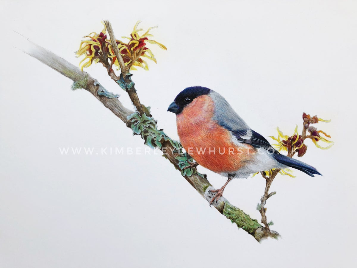 Image of 'Bullfinch' Limited Edition Print