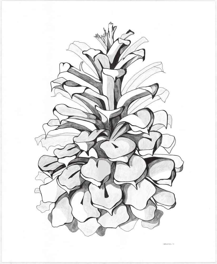 """Image of Pinecone Premium Giclee Print 8""""x10"""""""