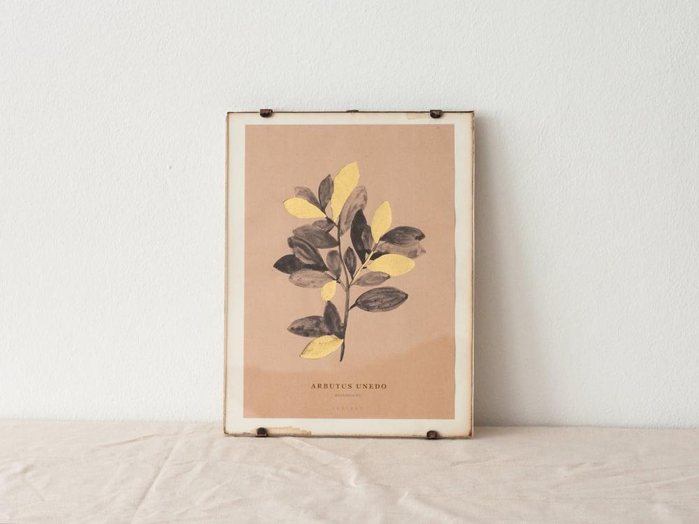 Image of Arbutus Unedo - strawberry tree