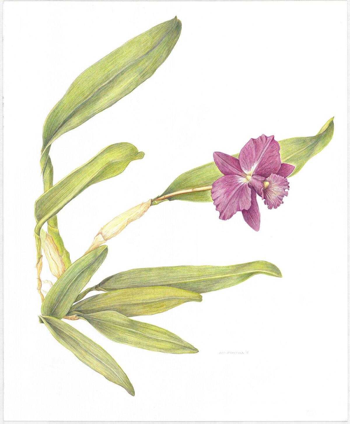 "'My Valentine' Orchid Art Print 8""x10"""
